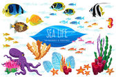 Vector set of sea animals and seaweeds Elements for marine life design Maritime characters for invitations cards decoration Ocean pattern with colorful tropical fishes Illustration for wallpaper