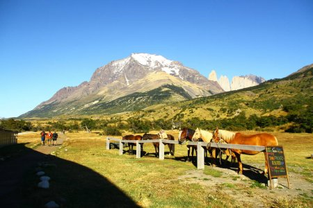 Photo for People who doesn't want to walk, can ride a horse in the national park, Torres Del Paine National Park Chile - Royalty Free Image