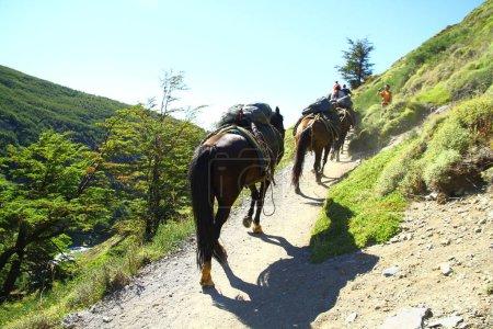 Photo pour Les chevaux transportent une certaine charge dans les montagnes dans le parc national de Torres del Paine, Chili - image libre de droit