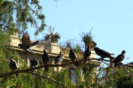 Photo for View of birds sitting on a branch of a tree, Santiago, Chile - Royalty Free Image