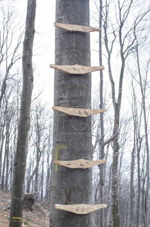Ladder on tree with wooden rungs