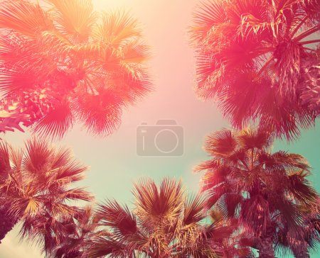 Vintage frame with tropic palm trees
