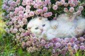 """Постер, картина, фотообои """"котенок, лежа на спине в цветах"""""""