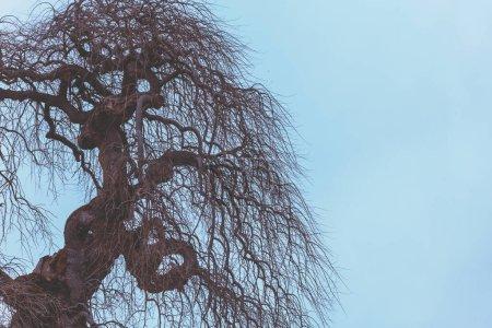 Photo pour Silhouette d'un arbre sans feuilles sur un ciel bleu. Vue ascendante. Scène d'automne - image libre de droit