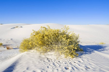 Photo for The natural beauty of White Sands National Monument in New Mexico. - Royalty Free Image