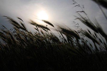 coucher de soleil dans la prairie
