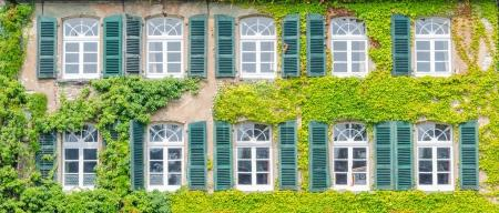 Facade greening with climbing plants