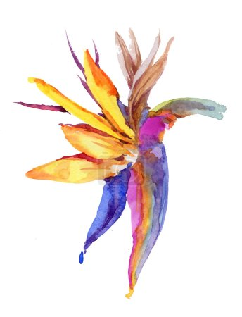 Flower watercolor illustration