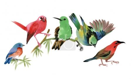 colorful small birds on twig