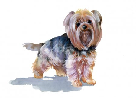 cute yorkshire terrier  dog