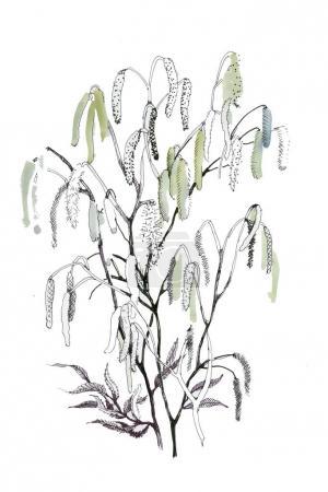 Flowering birch branches
