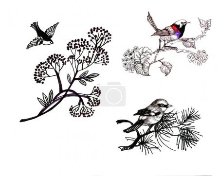 Hand drawn birds set