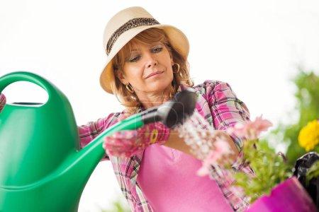 Gardening,senior woman watering the garden