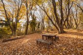 Picnic place with wooden table and benches in autumn forest