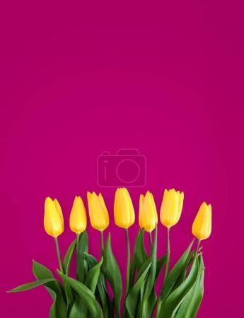 Photo pour Tulipes jaunes sur fond rose - image libre de droit