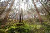 Great Forest, Fairytale forest in Sun rays, Walking in Czech Switzerland National Park