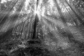 Great Forest, Fairytale forest in Sun rays, Walking in Czech Swi