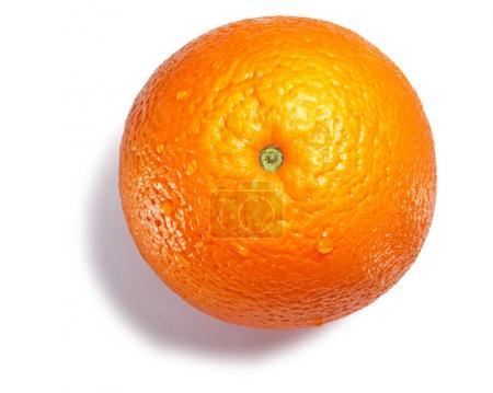 Orange Citrus sinensis, paths, top view