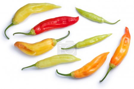 Aji Cristal C. baccatum chile, paths, top view