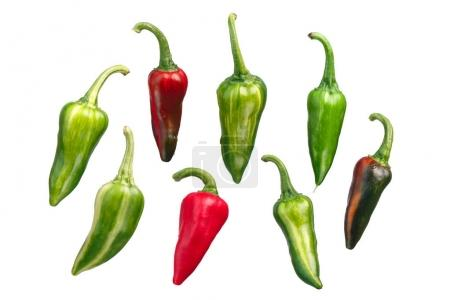 Fish chile peppers C. annuum, paths