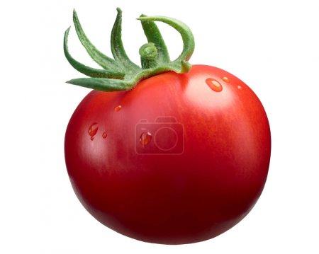 Marglobe ripe tomato, paths