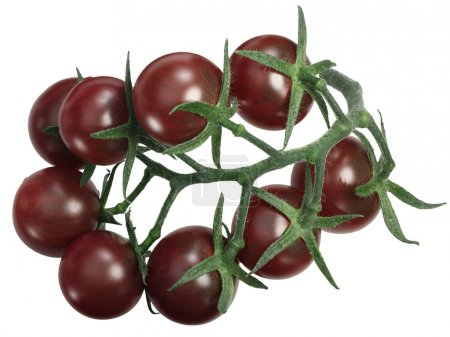 Tondo Nero tomatoes cluster tov, top, paths