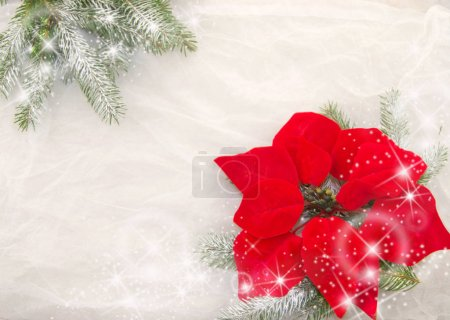 Christmas red flower, branches of Christmas tree, shiny stars and snowflakes on a white background