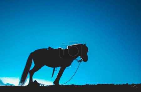 Silhouette image of a transportation service horse around Mount Bromo, Indonesia
