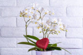 Beautiful archidea flower on white brich wall bachground, flower with love