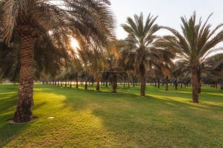 green garden in Dubai