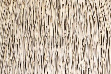 Patrón de paja, fondo y textura