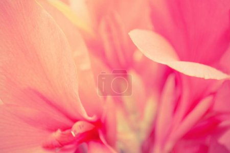 pink flower petals  abstract nature background