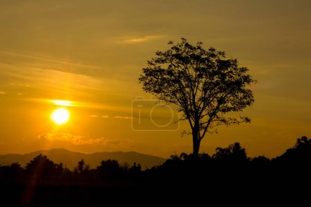 Beautiful landscape image with sun and trees silhouette at sunse