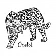 Постер, плакат: ocelot vector illustration sketch hand drawn with black lines isolated on white background