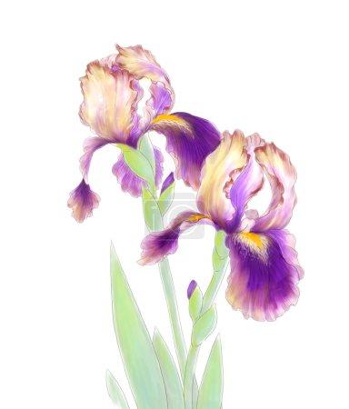 Tender iris flowers