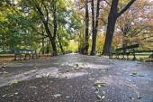 Autumn empty park.