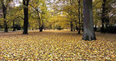 Autumn empty park in Poland.