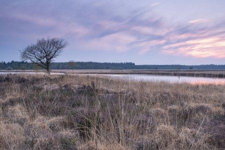 Photo pour Ciel coloré et eau colorée dans le lac reflétés en soirée, accent sur l'herbe au premier plan. - image libre de droit