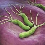 Helicobacter Pylori is a Gram-negative, microaerop...