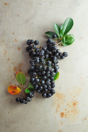 Aronia berries with leaves
