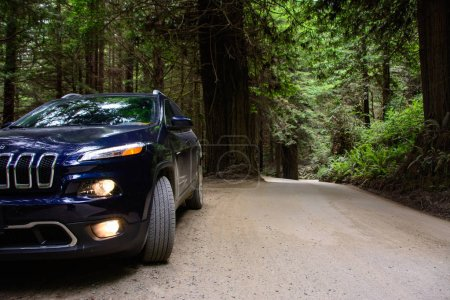 Redwood National Park California USA