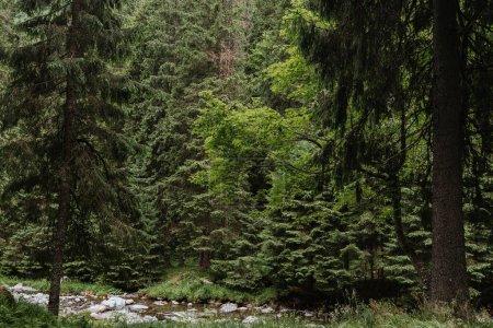 Photo pour Parc avec bancs en forêt - image libre de droit