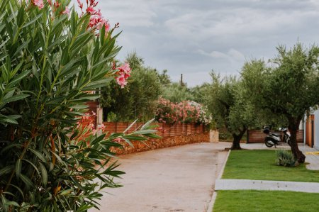 Photo pour Maison rurale en pierre sèche dans l'oliveraie en Espagne ou en Grèce ou en Italie - image libre de droit