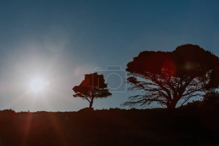 Photo for Silhouette of trees with sunbeams. summer dawn. beautiful natural background of Greece. - Royalty Free Image