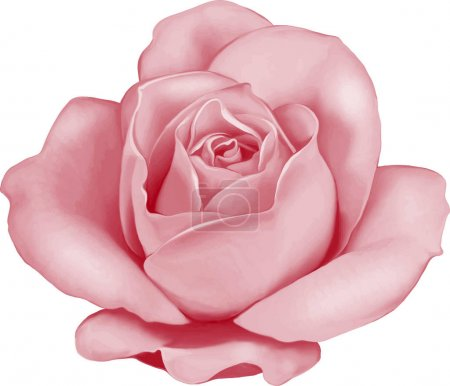 Photo pour Bouton de fleur rose isolé sur fond blanc - image libre de droit