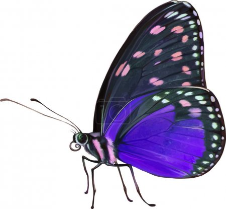 little colorful butterfly
