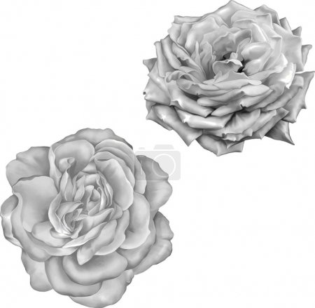 Photo for Close-up Illustration of beautiful flowers on background - Royalty Free Image