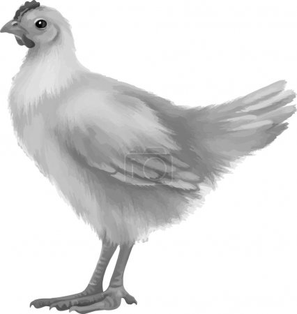 black and White chicken