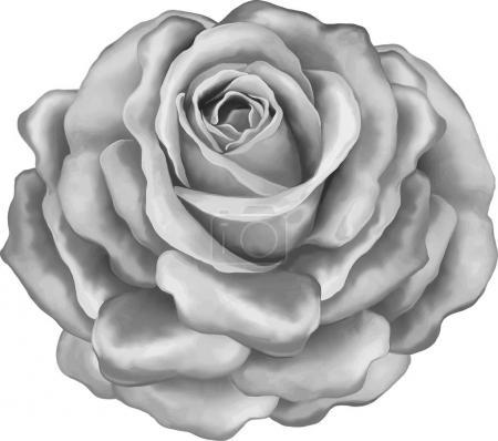 rose flower bud