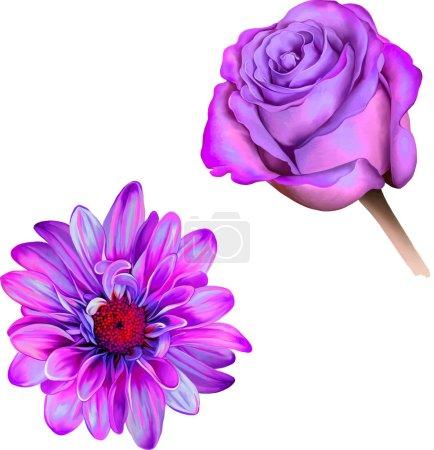 Photo pour Violet Rose rose fleur. gerbera rose isolé sur fond blanc - image libre de droit